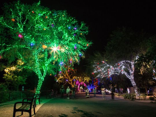 walking path lit with lights at the Phoenix Zoo Zoolights