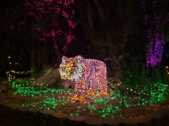 New lion zoo lights
