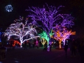 Holiday Light displays at the Phoenix zoo