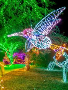 Phoenix ZooLights For The Holidays